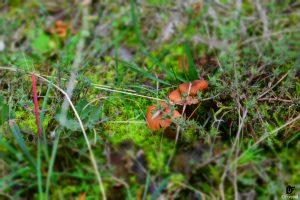IDForestal Aprovechamiento Micológico