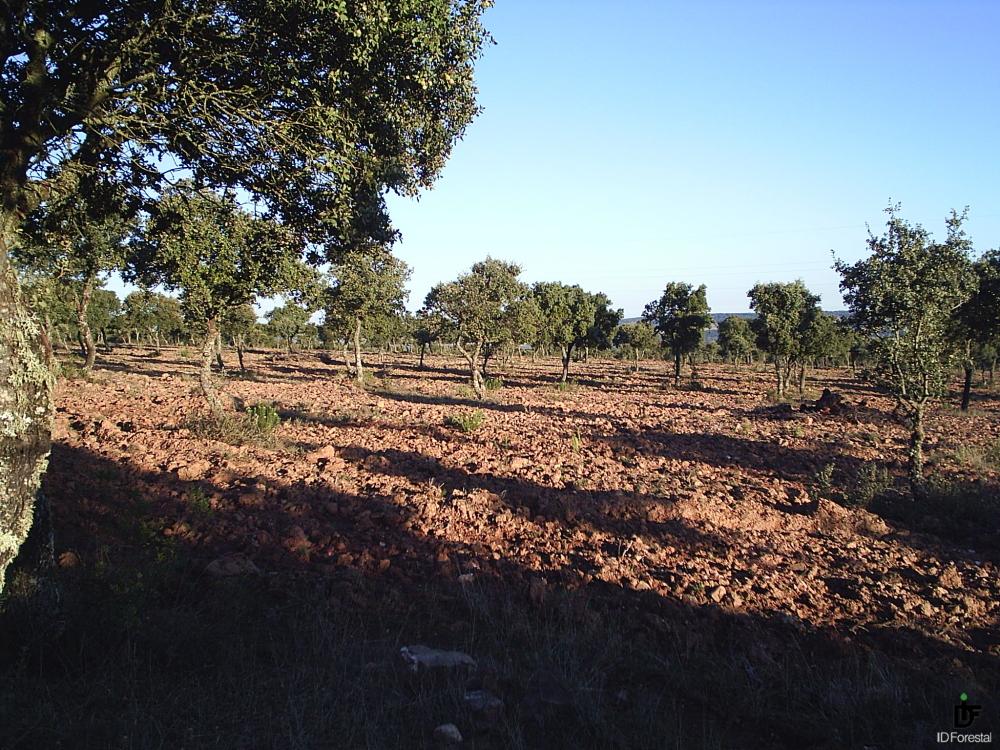 Ayudas Reforestacion 2018