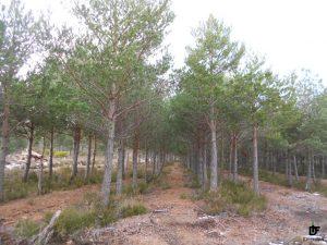 IDForestal.- Ayudas Reforestacion 2017 JCyL