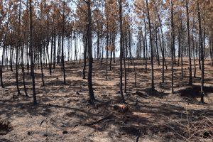 2017... Incendios Forestales