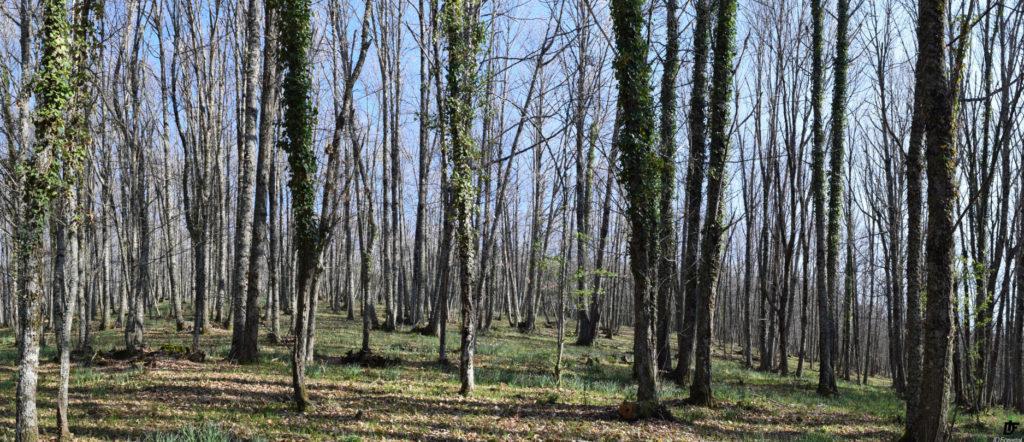 IDForestal Castañar de El Bosque Béjar (Salamanca)