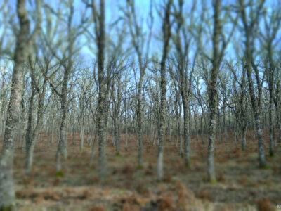 IDF.- Huella Carbono IDForestal